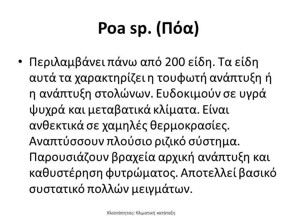 Χλοοτάπητας: Κλιματική κατάταξη Poa sp. (Πόα) Περιλαμβάνει πάνω από 200 είδη.