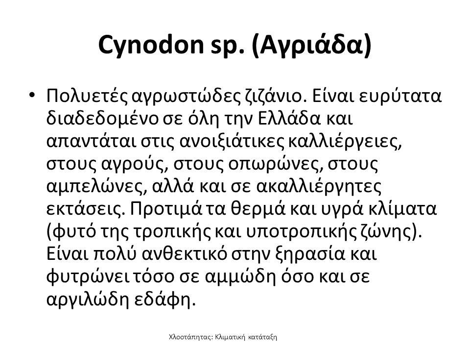 Χλοοτάπητας: Κλιματική κατάταξη Cynodon sp. (Αγριάδα) Πολυετές αγρωστώδες ζιζάνιο.