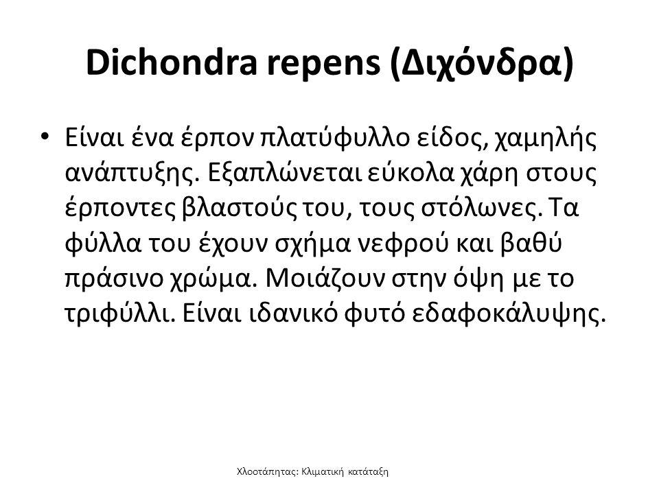 Χλοοτάπητας: Κλιματική κατάταξη Dichondra repens (Διχόνδρα) Είναι ένα έρπον πλατύφυλλο είδος, χαμηλής ανάπτυξης.