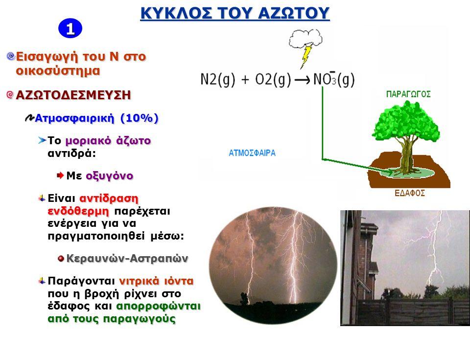 ΚΥΚΛΟΣ ΤΟΥ ΑΖΩΤΟΥ Εισαγωγή του Ν στο οικοσύστημα ΑΖΩΤΟΔΕΣΜΕΥΣΗ Ατμοσφαιρική (10%) μοριακό άζωτο Το μοριακό άζωτο αντιδρά: οξυγόνο Mε οξυγόνο αντίδραση ενδόθερμη Είναι αντίδραση ενδόθερμη παρέχεται ενέργεια για να πραγματοποιηθεί μέσω:Κεραυνών-Αστραπών νιτρικά ιόντα απορροφώνται από τους παραγωγούς Παράγονται νιτρικά ιόντα που η βροχή ρίχνει στο έδαφος και απορροφώνται από τους παραγωγούς 1