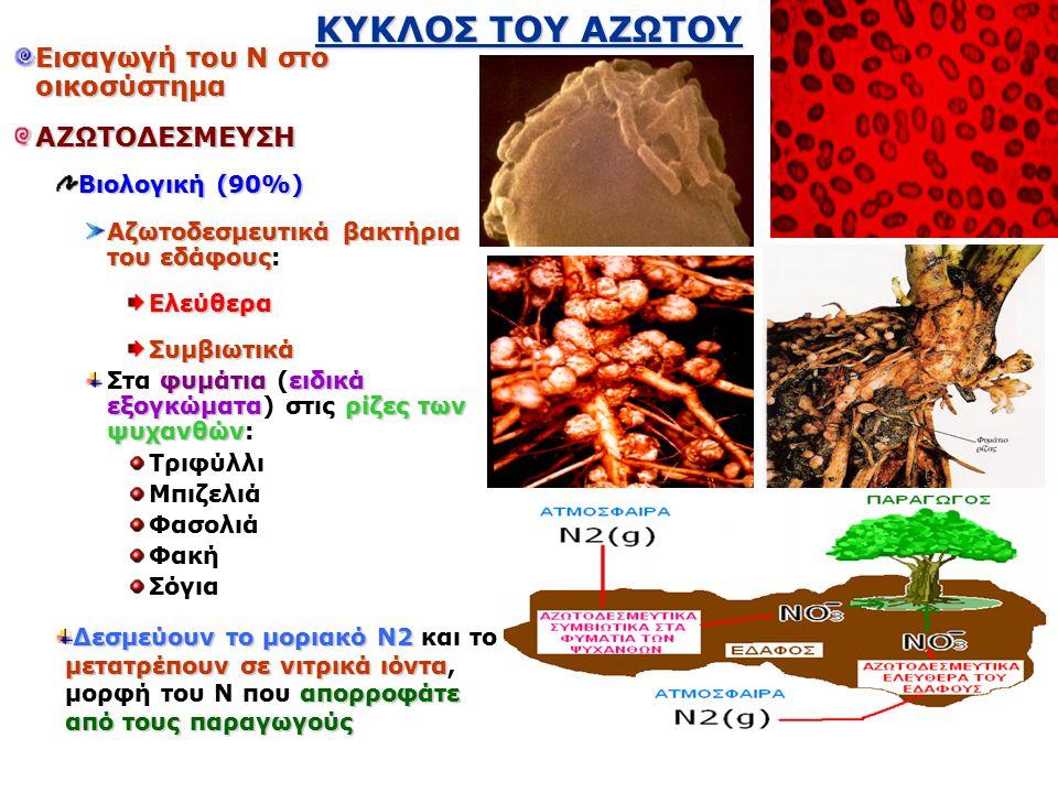 ΚΥΚΛΟΣ ΤΟΥ ΑΖΩΤΟΥ Εισαγωγή του Ν στο οικοσύστημα ΑΖΩΤΟΔΕΣΜΕΥΣΗ Βιολογική (90%) Αζωτοδεσμευτικά βακτήρια του εδάφους Αζωτοδεσμευτικά βακτήρια του εδάφους:Ελεύθερα Συμβιωτικά φυμάτιαειδικά εξογκώματαρίζες των ψυχανθών Στα φυμάτια (ειδικά εξογκώματα) στις ρίζες των ψυχανθών: Τριφύλλι Μπιζελιά Φασολιά Φακή Σόγια Δεσμεύουν το μοριακό Ν2 μετατρέπουν σε νιτρικά ιόντα απορροφάτε από τους παραγωγούς Δεσμεύουν το μοριακό Ν2 και το μετατρέπουν σε νιτρικά ιόντα, μορφή του Ν που απορροφάτε από τους παραγωγούς