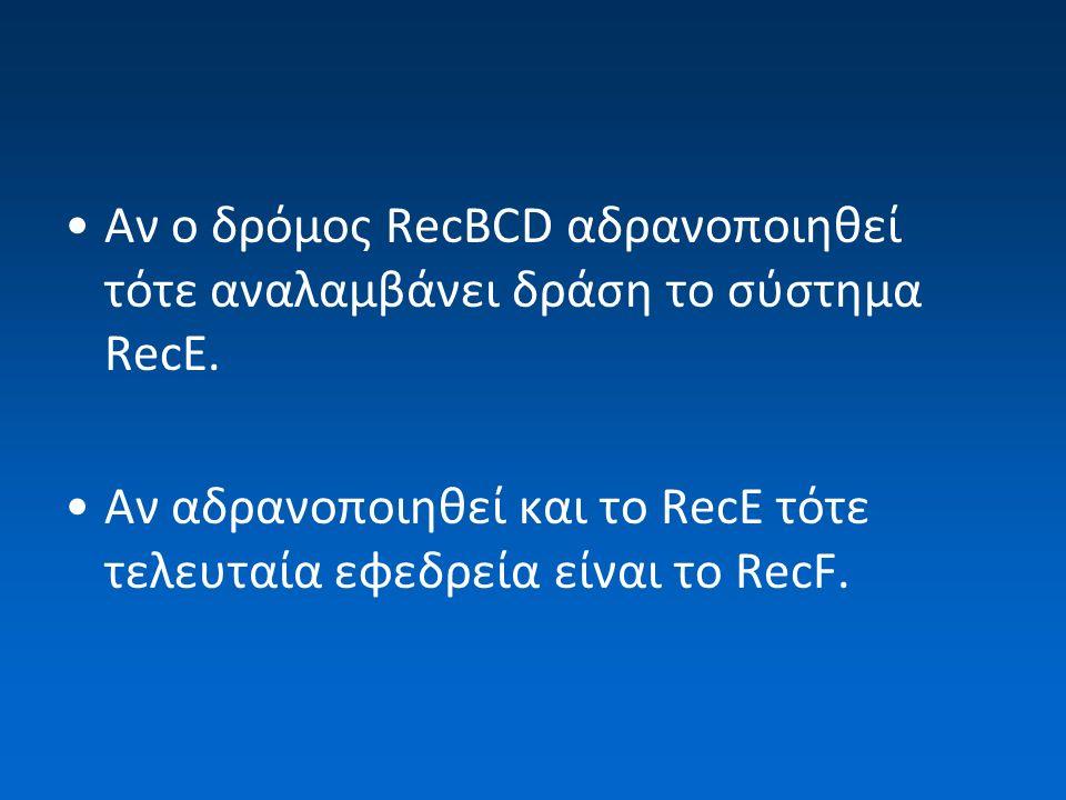 Αν ο δρόμος RecBCD αδρανοποιηθεί τότε αναλαμβάνει δράση το σύστημα RecE.