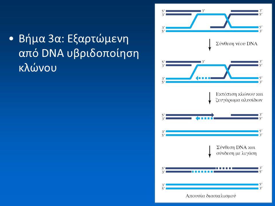 Βήμα 3α: Εξαρτώμενη από DNA υβριδοποίηση κλώνου