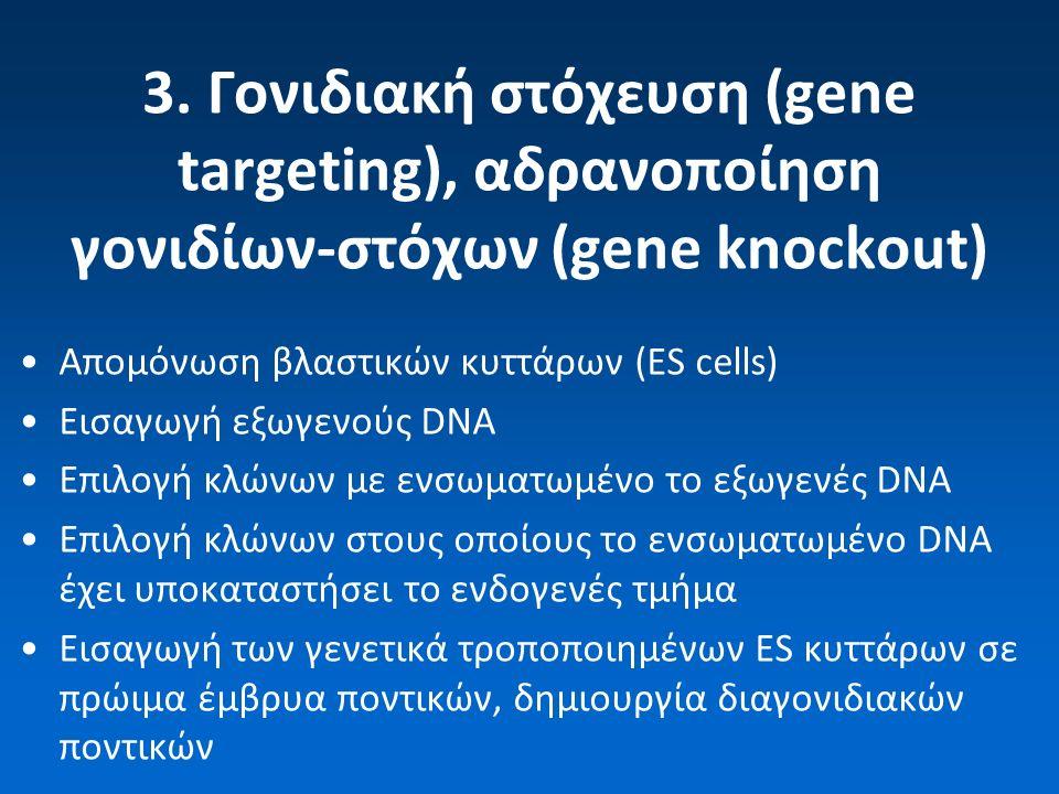 3. Γονιδιακή στόχευση (gene targeting), αδρανοποίηση γονιδίων-στόχων (gene knockout) Απομόνωση βλαστικών κυττάρων (ES cells) Εισαγωγή εξωγενούς DNA Επ