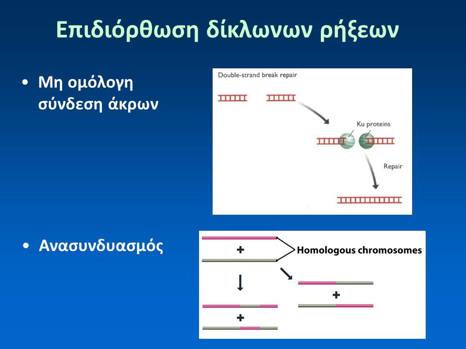 Επιδιόρθωση δίκλωνων ρήξεων Ανασυνδυασμός Μη ομόλογη σύνδεση άκρων