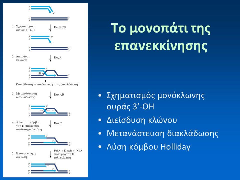 Πώς μελετάμε την επιδιόρθωση των δίκλωνων ρήξεων; Μελέτη μεταλλαγμάτων της E.