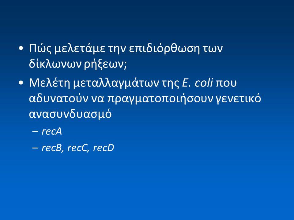 To σύμπλοκο RecBCD Αποπεριέλιξη του λείου άκρου του DNA –RecB ATP-dependent helicase, κατεύθυνση 3' → 5' ενεργότητα νουκλεάσης (3' → 5' και 5' → 3') –RecD ATP-dependent helicase, κατεύθυνση 5' → 3' –RecC αλληλεπιδρά και σταθεροποιεί τις RecB/RecD