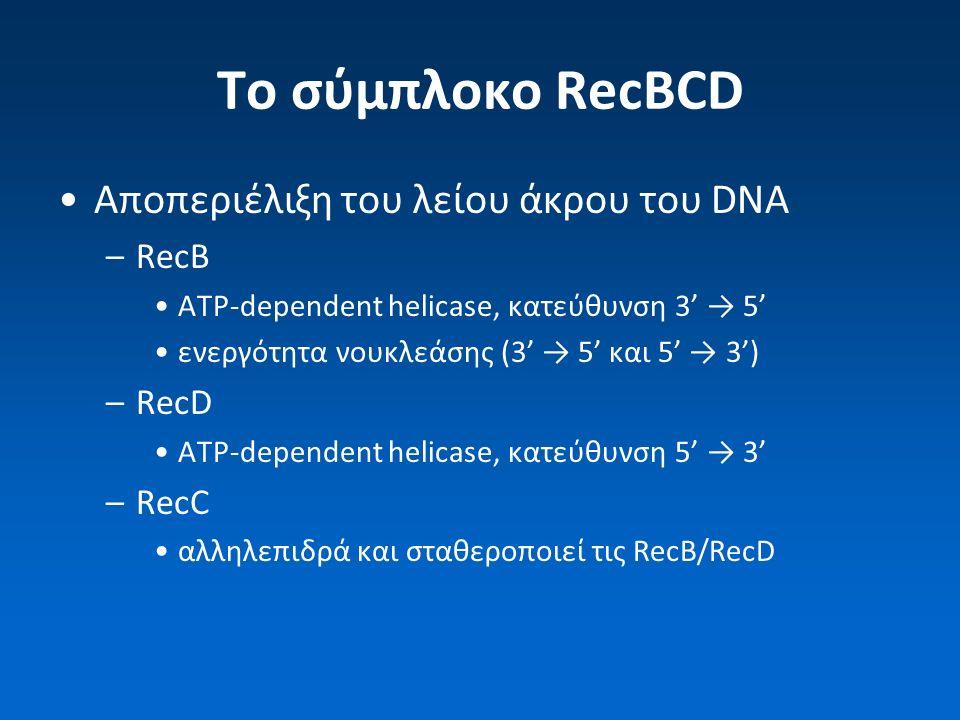To σύμπλοκο RecBCD Αποπεριέλιξη του λείου άκρου του DNA –RecB ATP-dependent helicase, κατεύθυνση 3' → 5' ενεργότητα νουκλεάσης (3' → 5' και 5' → 3') –