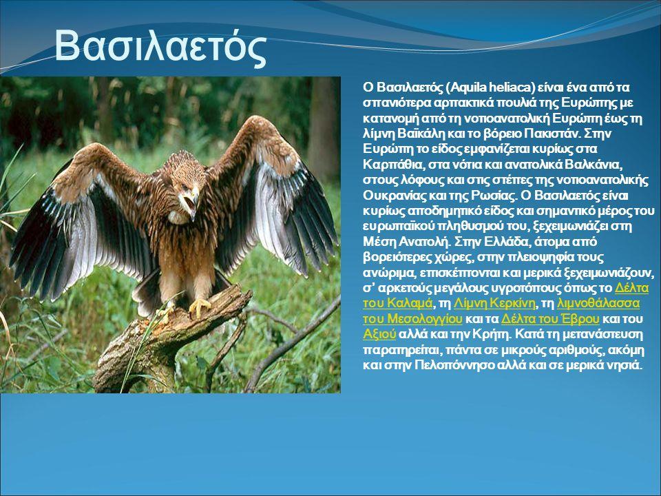 Βασιλαετός Ο Βασιλαετός (Aquila heliaca) είναι ένα από τα σπανιότερα αρπακτικά πουλιά της Ευρώπης με κατανομή από τη νοτιοανατολική Ευρώπη έως τη λίμνη Βαϊκάλη και το βόρειο Πακιστάν.