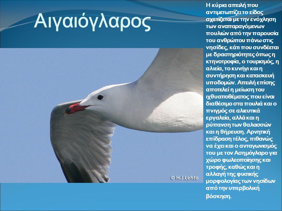 Αιγαιόγλαρος Η κύρια απειλή που αντιμετωπίζει το είδος σχετίζεται με την ενόχληση των αναπαραγόμενων πουλιών από την παρουσία του ανθρώπου πάνω στις νησίδες, κάτι που συνδέεται με δραστηριότητες όπως η κτηνοτροφία, ο τουρισμός, η αλιεία, το κυνήγι και η συντήρηση και κατασκευή υποδομών.
