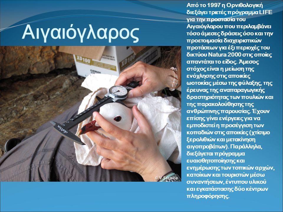 Αιγαιόγλαρος Από το 1997 η Ορνιθολογική διεξάγει τριετές πρόγραμμα LIFE για την προστασία του Αιγαιόγλαρου που περιλαμβάνει τόσο άμεσες δράσεις όσο και την προετοιμασία διαχειριστικών προτάσεων για έξι περιοχές του δικτύου Natura 2000 στις οποίες απαντάται το είδος.