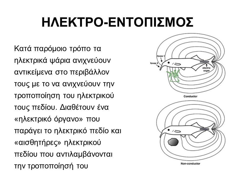 ΗΛΕΚΤΡΟ-ΕΝΤΟΠΙΣΜΟΣ Κατά παρόμοιο τρόπο τα ηλεκτρικά ψάρια ανιχνεύουν αντικείμενα στο περιβάλλον τους με το να ανιχνεύουν την τροποποίηση του ηλεκτρικού τους πεδίου.