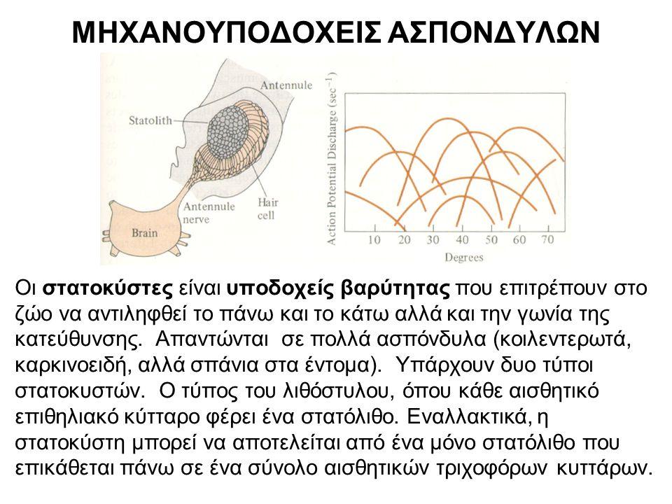 Κυρτά μάτια-Ομματίδια Κάθε ομματίδιο έχει 1.τον δικό του αμφίκυρτο φακό, 2.