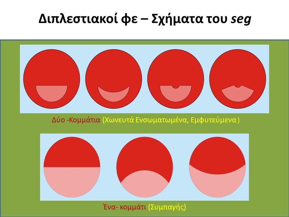 Διπλεστιακοί φε – Σχήματα του seg Ένα- κομμάτι (Συμπαγής) Δύο -Κομμάτια (Χωνευτά Ενσωματωμένα, Εμφυτεύμενα )