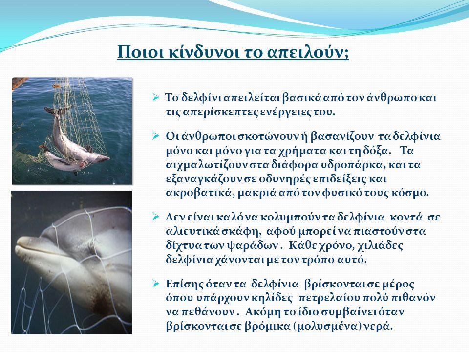 Ποιοι κίνδυνοι το απειλούν;  Το δελφίνι απειλείται βασικά από τον άνθρωπο και τις απερίσκεπτες ενέργειες του.