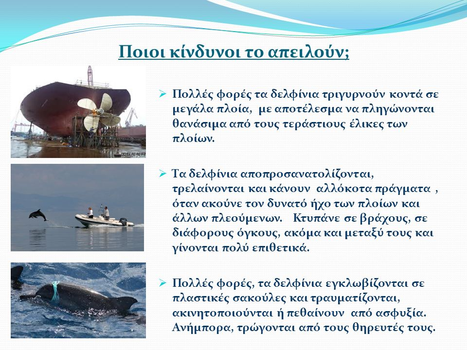 Ποιοι κίνδυνοι το απειλούν;  Πολλές φορές τα δελφίνια τριγυρνούν κοντά σε μεγάλα πλοία, με αποτέλεσμα να πληγώνονται θανάσιμα από τους τεράστιους έλικες των πλοίων.