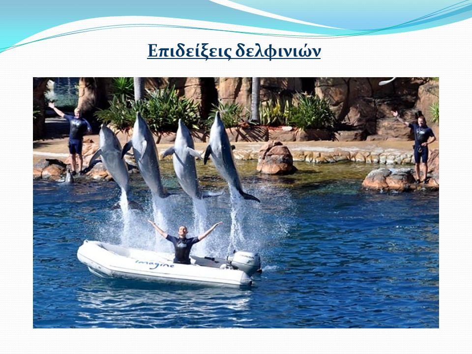 Επιδείξεις δελφινιών