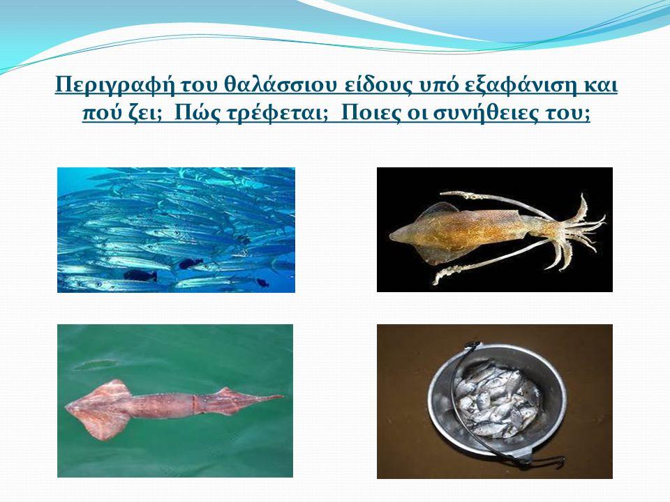 Περιγραφή του θαλάσσιου είδους υπό εξαφάνιση και πού ζει; Πώς τρέφεται; Ποιες οι συνήθειες του;