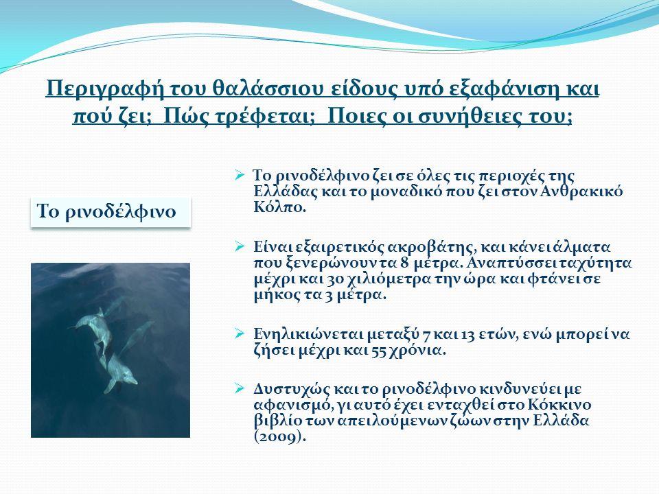 Περιγραφή του θαλάσσιου είδους υπό εξαφάνιση και πού ζει; Πώς τρέφεται; Ποιες οι συνήθειες του;  Το ρινοδέλφινο ζει σε όλες τις περιοχές της Ελλάδας και το μοναδικό που ζει στον Ανθρακικό Κόλπο.