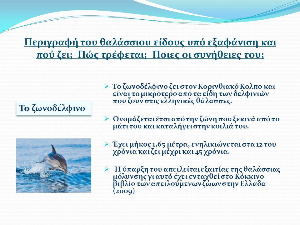 Περιγραφή του θαλάσσιου είδους υπό εξαφάνιση και πού ζει; Πώς τρέφεται; Ποιες οι συνήθειες του;  Το ζωνοδέλφινο ζει στον Κορινθιακό Κολπο και είναι το μικρότερο από τα είδη των δελφινιών που ζουν στις ελληνικές θάλασσες.