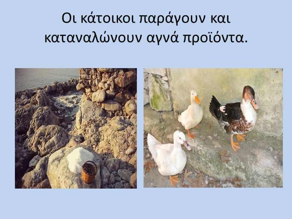 Ασχολούνται με την αλιεία, την κτηνοτροφία,