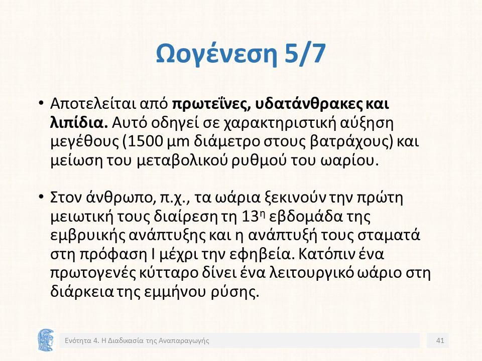 Ωογένεση 5/7 Αποτελείται από πρωτεΐνες, υδατάνθρακες και λιπίδια.