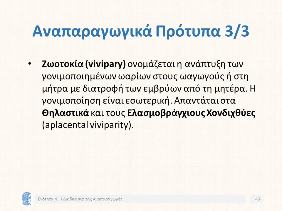 Αναπαραγωγικά Πρότυπα 3/3 Ζωοτοκία (vivipary) ονομάζεται η ανάπτυξη των γονιμοποιημένων ωαρίων στους ωαγωγούς ή στη μήτρα με διατροφή των εμβρύων από τη μητέρα.