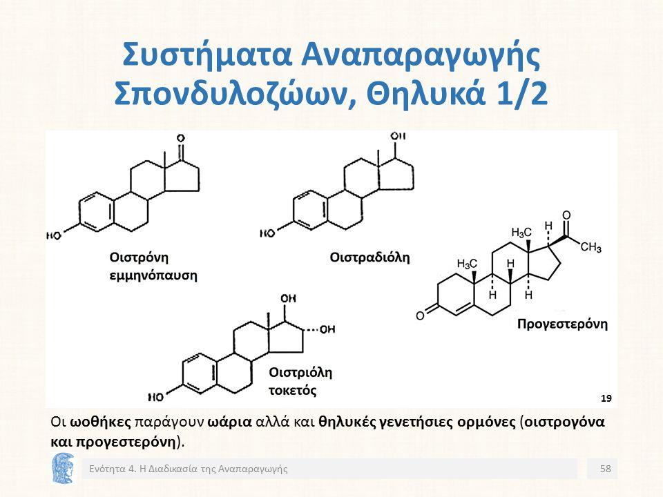 Συστήματα Αναπαραγωγής Σπονδυλοζώων, Θηλυκά 1/2 Ενότητα 4.