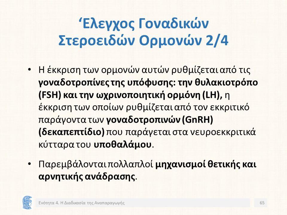 'Ελεγχος Γοναδικών Στεροειδών Ορμονών 2/4 Η έκκριση των ορμονών αυτών ρυθμίζεται από τις γοναδοτροπίνες της υπόφυσης: την θυλακιοτρόπο (FSH) και την ωχρινοποιητική ορμόνη (LH), η έκκριση των οποίων ρυθμίζεται από τον εκκριτικό παράγοντα των γοναδοτροπινών (GnRH) (δεκαπεπτίδιο) που παράγεται στα νευροεκκριτικά κύτταρα του υποθαλάμου.