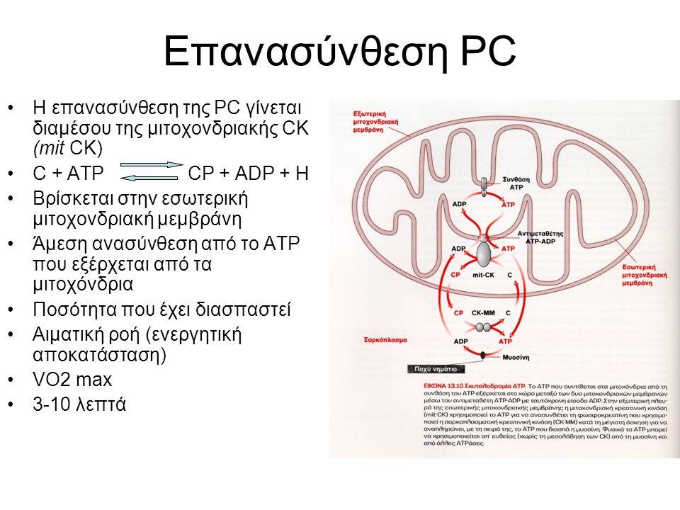 Επανασύνθεση PC H επανασύνθεση της PC γίνεται διαμέσου της μιτοχονδριακής CK (mit CK) C + ATP CP + ADP + H Βρίσκεται στην εσωτερική μιτοχονδριακή μεμβράνη Άμεση ανασύνθεση από το ΑΤΡ που εξέρχεται από τα μιτοχόνδρια Ποσότητα που έχει διασπαστεί Αιματική ροή (ενεργητική αποκατάσταση) VO2 max 3-10 λεπτά