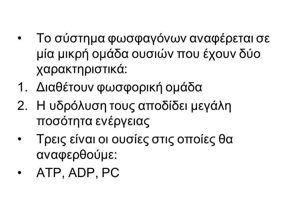 Το σύστημα φωσφαγόνων αναφέρεται σε μία μικρή ομάδα ουσιών που έχουν δύο χαρακτηριστικά: 1.Διαθέτουν φωσφορική ομάδα 2.Η υδρόλυση τους αποδίδει μεγάλη ποσότητα ενέργειας Τρεις είναι οι ουσίες στις οποίες θα αναφερθούμε: ΑΤΡ, ADP, PC