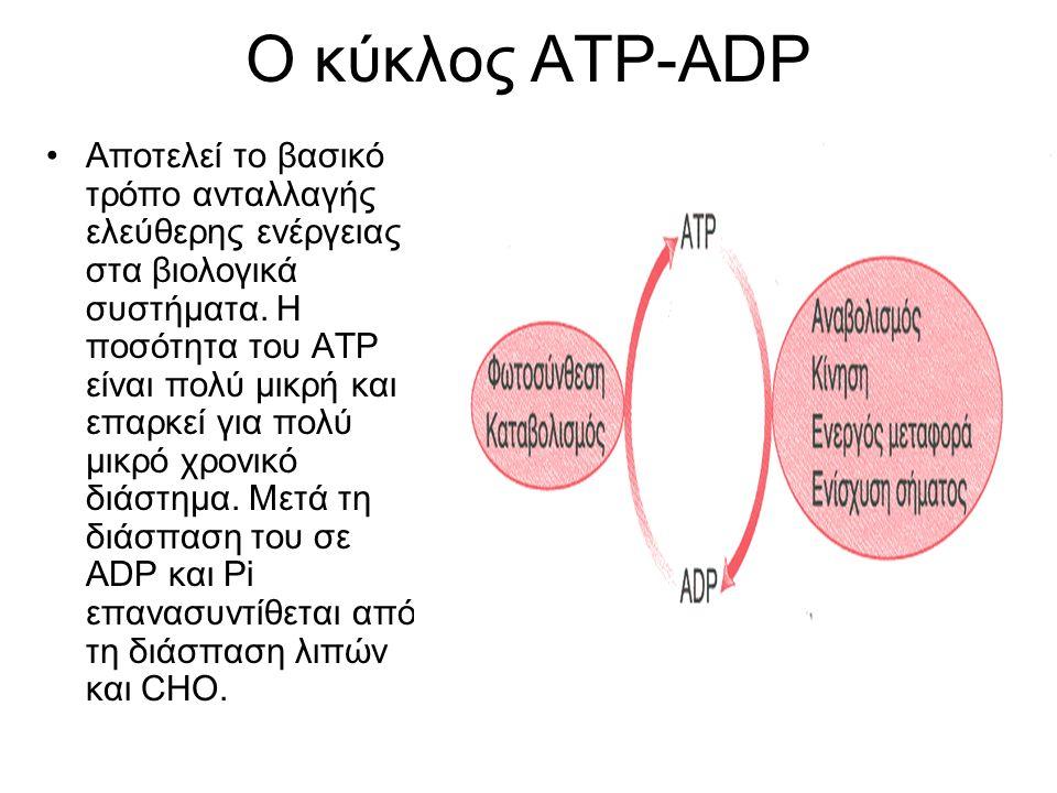 Ο κύκλος ΑΤΡ-ADP κατά την άσκηση H ποσότητα του ΑΤΡ είναι αρκετή για μυϊκές προσπάθειες μερικών δευτερολέπτων (~3 sec).