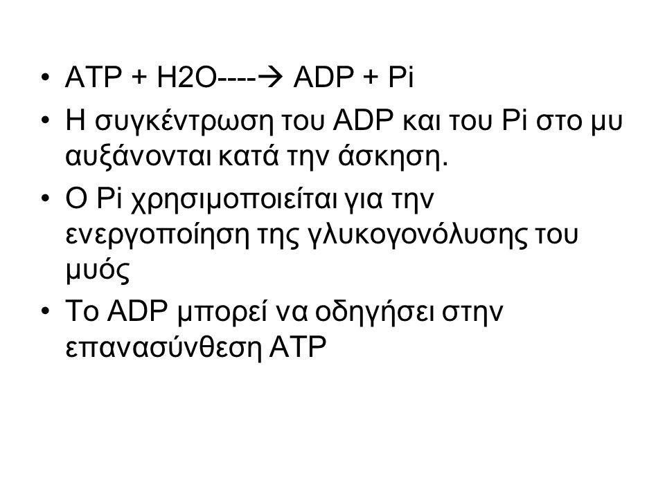 ΑΤΡ + Η2Ο----  ADP + Pi Η συγκέντρωση του ADP και του Pi στο μυ αυξάνονται κατά την άσκηση.