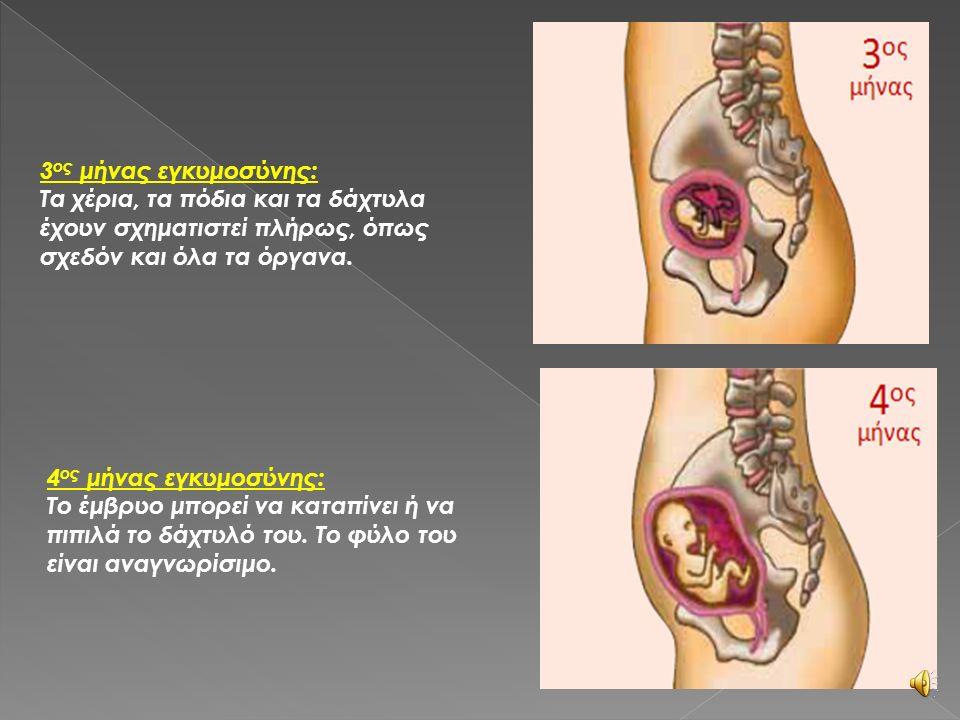 1 ος μήνας εγκυμοσύνης: Αρχίζουν να σχηματίζονται η καρδιά και η σπονδυλική στήλη στο έμβρυο. 2 ος μήνας εγκυμοσύνης: Αρχίζουν να σχηματίζονται τα μάτ