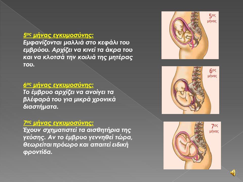3 ος μήνας εγκυμοσύνης: Τα χέρια, τα πόδια και τα δάχτυλα έχουν σχηματιστεί πλήρως, όπως σχεδόν και όλα τα όργανα. 4 ος μήνας εγκυμοσύνης: Το έμβρυο μ