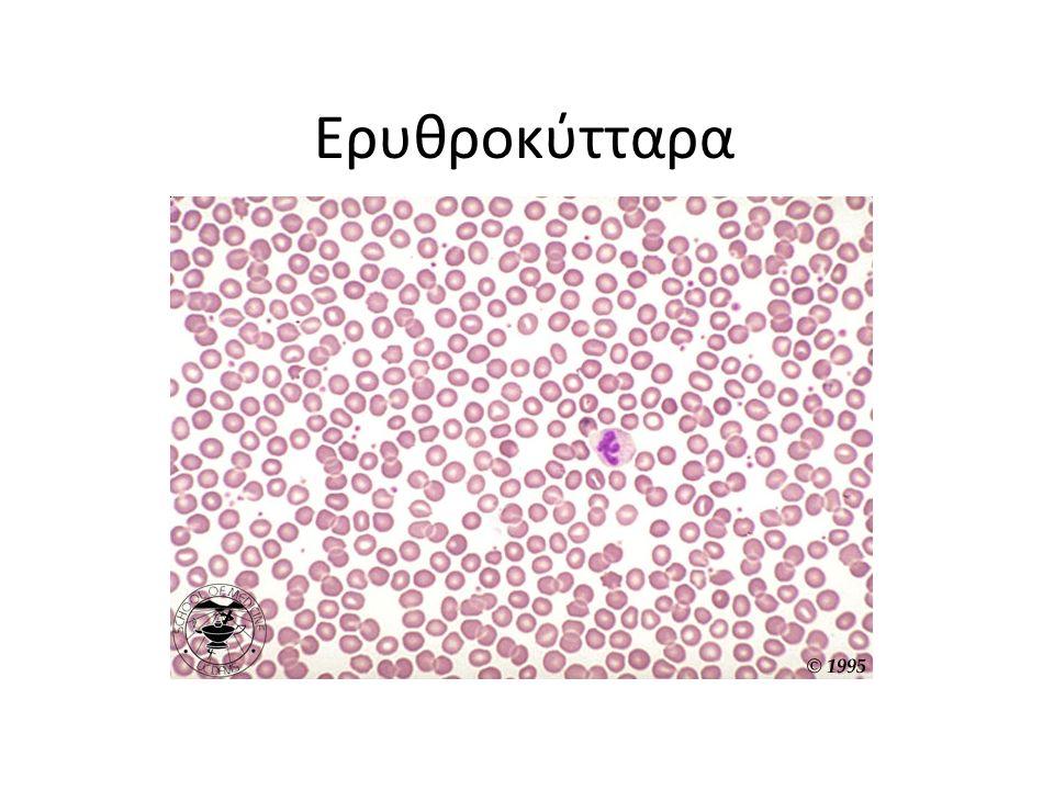 Ερυθροκύτταρα