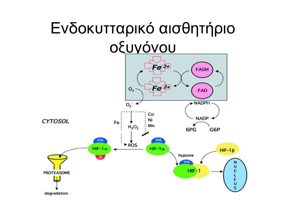 Ενδοκυτταρικό αισθητήριο οξυγόνου
