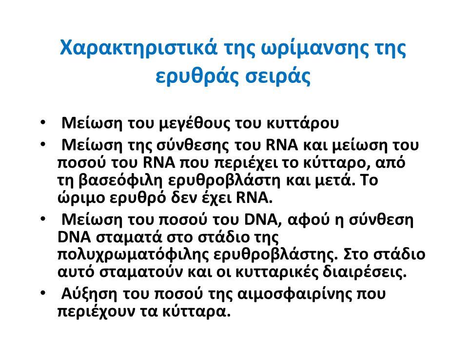 Χαρακτηριστικά της ωρίμανσης της ερυθράς σειράς Μείωση του μεγέθους του κυττάρου Μείωση της σύνθεσης του RNA και μείωση του ποσού του RNA που περιέχει το κύτταρο, από τη βασεόφιλη ερυθροβλάστη και μετά.