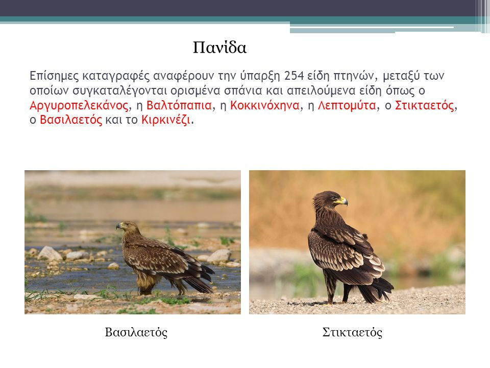Επίσημες καταγραφές αναφέρουν την ύπαρξη 254 είδη πτηνών, μεταξύ των οποίων συγκαταλέγονται ορισμένα σπάνια και απειλούμενα είδη όπως ο Αργυροπελεκάνος, η Βαλτόπαπια, η Κοκκινόχηνα, η Λεπτομύτα, ο Στικταετός, ο Βασιλαετός και το Κιρκινέζι.