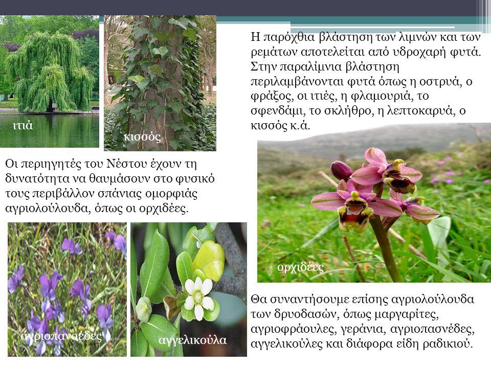 Η παρόχθια βλάστηση των λιμνών και των ρεμάτων αποτελείται από υδροχαρή φυτά.