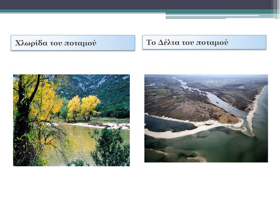 Χλωρίδα του ποταμού Το Δέλτα του ποταμού