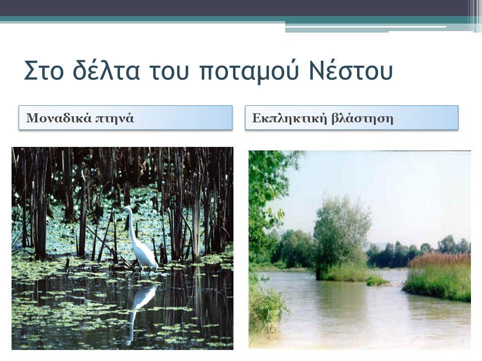 Στο δέλτα του ποταμού Νέστου Μοναδικά πτηνά Εκπληκτική βλάστηση