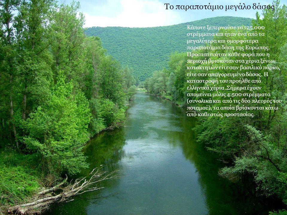 Το παραποτάμιο μεγάλο δάσος Κάποτε ξεπερνούσε τα 125.000 στρέμματα και ήταν ένα από τα μεγαλύτερα και ομορφότερα παραποτάμια δάση της Ευρώπης. Προστατ