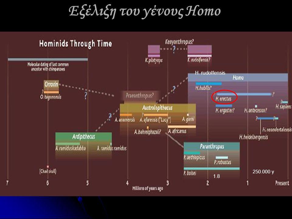 Εξέλιξη του γένους Homo H. rudolfensis 1.8 250.000 y