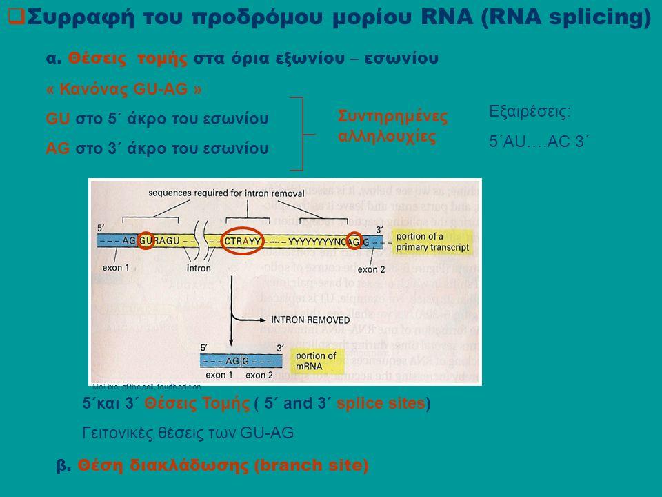  Συρραφή του προδρόμου μορίου RNA (RNA splicing) α.