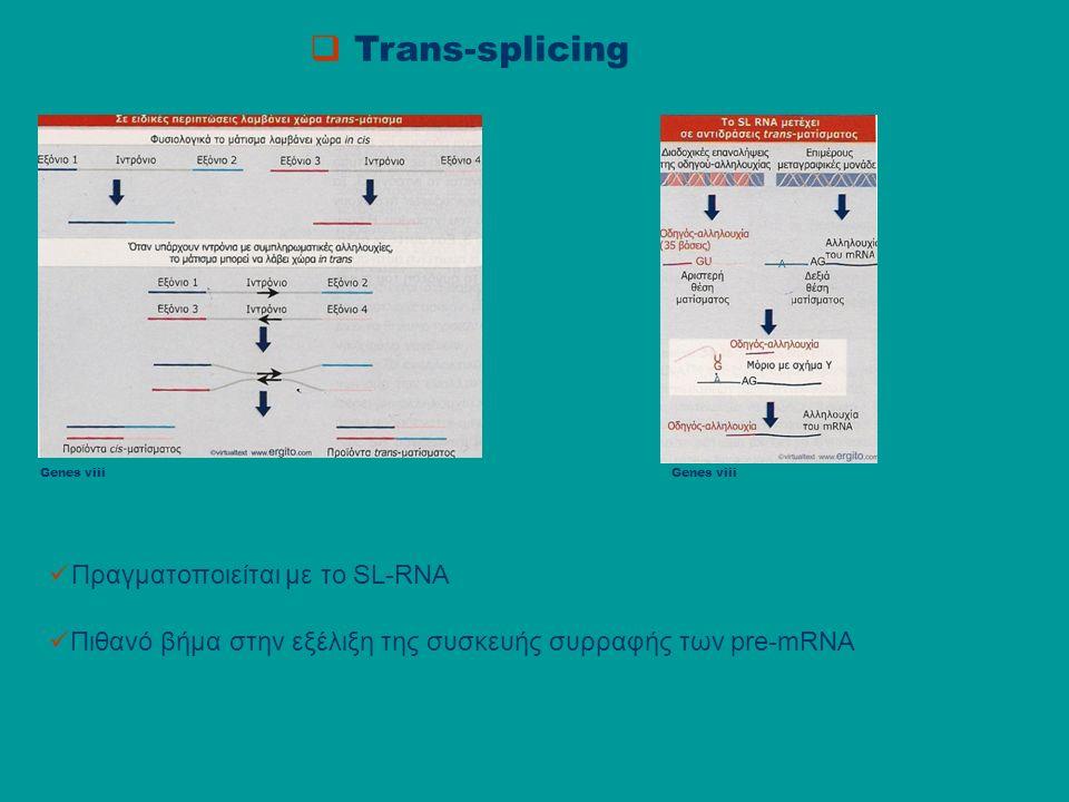  Trans-splicing Genes viii Πραγματοποιείται με το SL-RNA Πιθανό βήμα στην εξέλιξη της συσκευής συρραφής των pre-mRNA