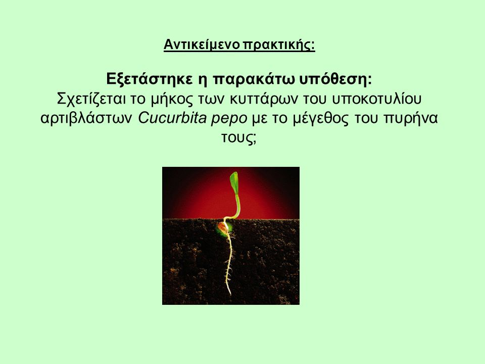 Αντικείμενο πρακτικής: Εξετάστηκε η παρακάτω υπόθεση: Σχετίζεται το μήκος των κυττάρων του υποκοτυλίου αρτιβλάστων Cucurbita pepo με το μέγεθος του πυ