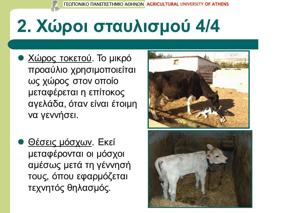 2. Χώροι σταυλισμού 4/4 Χώρος τοκετού. To μικρό προαύλιο χρησιμοποιείται ως χώρος στον οποίο μεταφέρεται η επίτοκος αγελάδα, όταν είναι έτοιμη να γενν