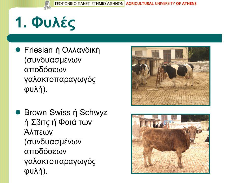 1. Φυλές Friesian ή Ολλανδική (συνδυασμένων αποδόσεων γαλακτοπαραγωγός φυλή). Brown Swiss ή Schwyz ή Σβιτς ή Φαιά των Άλπεων (συνδυασμένων αποδόσεων γ