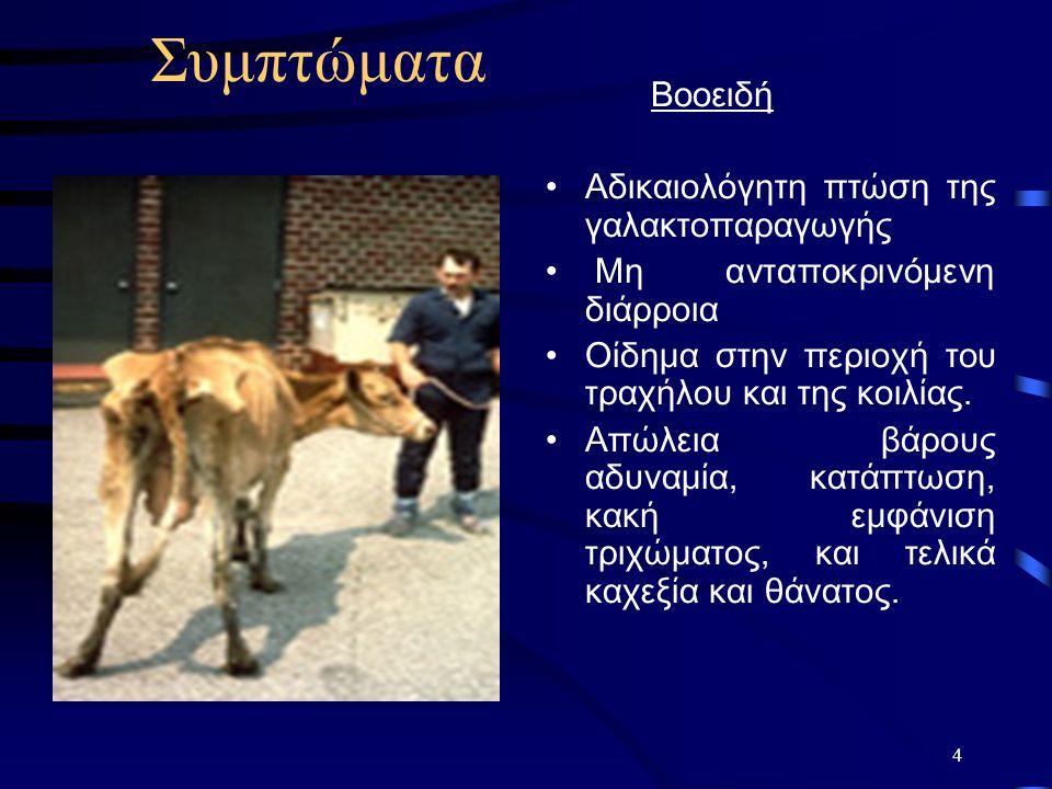 Συμπτώματα Βοοειδή Αδικαιολόγητη πτώση της γαλακτοπαραγωγής Μη ανταποκρινόμενη διάρροια Οίδημα στην περιοχή του τραχήλου και της κοιλίας.